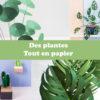 181105-des-plantes-tout-en-papier